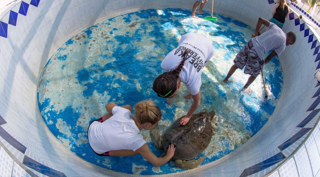Limpieza de un tanque de tortugas marinas en México.